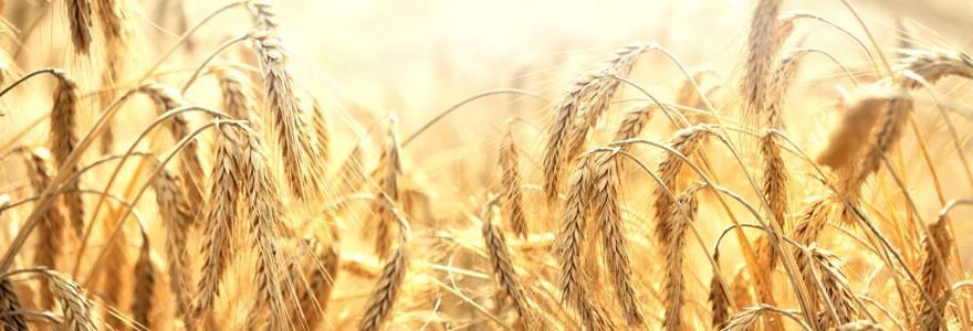 Analyses et cours des marchés agricoles